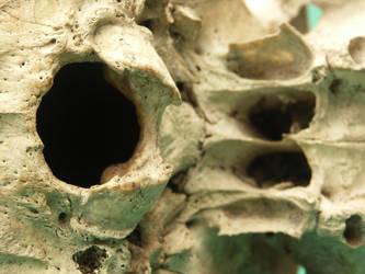 Human Skull 46 by Pronus