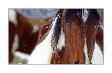 C4D Winter Horse by cravingfordesign