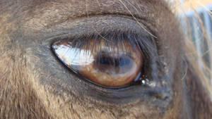 Equine Eye Stock One by ducktoller