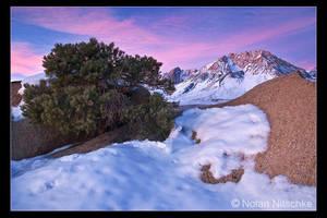 Buttermilk Sunrise by narmansk8