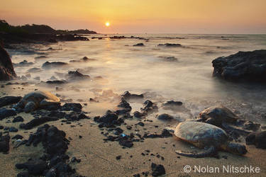 Sea Turtle Sunset by narmansk8