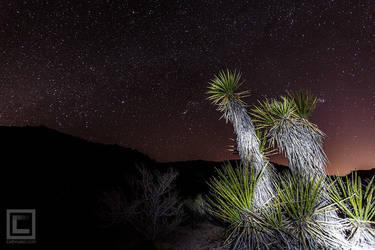 Stars at Joshua Tree National Park by soak2179