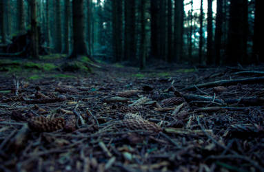Into the woods by blutlust