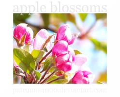 Apple Blossoms by patronus4000