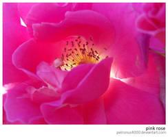 Pink Rose by patronus4000