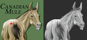 Canadian Mule by CanadianMule