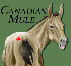 CanadianMule's Profile Picture