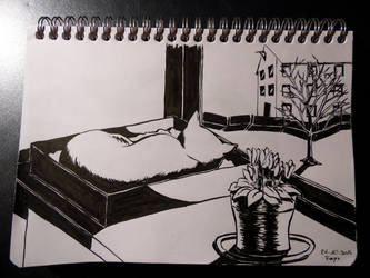 Day 26- Box by Malvaceae