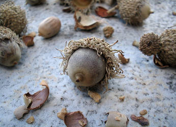 Acorn by flugal