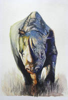 Rhino Study - Watercolor by Glaubart
