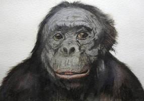 Monkey - Watercolor by Glaubart