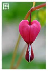 Verflossene Liebe by SchwarzWieEbenholZ