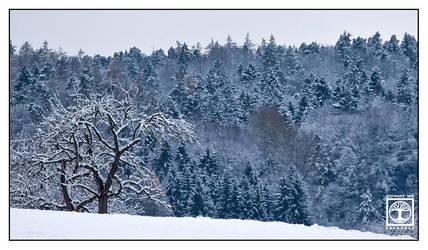 First Snow's Fairytale by SchwarzWieEbenholZ