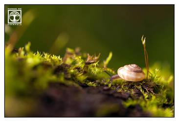 Little World by SchwarzWieEbenholZ