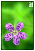 Petals in Purple by SchwarzWieEbenholZ