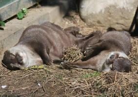 Otter Power 2 by Taitai03