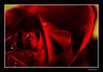 Red Rose2 by garfildus