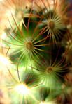 Cactus by Dori1990
