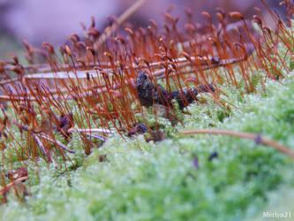 Moss bloom by Merlya21
