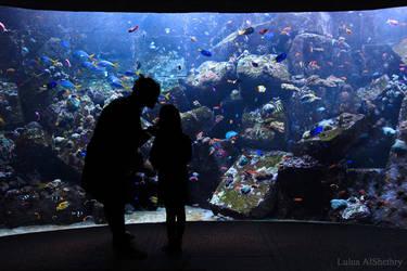 Aquarium by Logosh-L