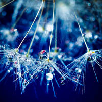 Sparkling blue by dansch