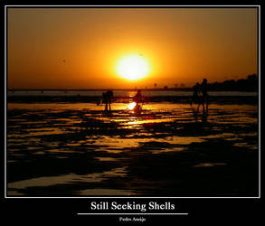 Still Seeking Shells by In-Apt