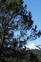 Blanca Behind The Trees by jensaarai