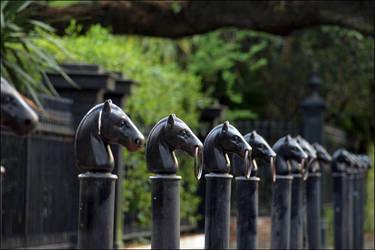 Garden District Horse Hitches by jensaarai