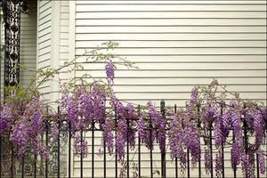Lavender by jensaarai
