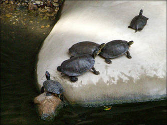 'I like turtles' by jensaarai