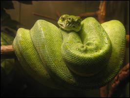 Snake by jensaarai