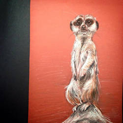 Timon by lizzy1e