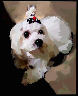 Maltese Dog Portrait by GiraffeMeow