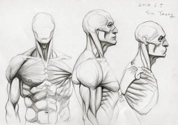 Anatomy Study 2014.06 by Kimsuyeong81