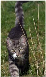 Bernt - The cat by karsken