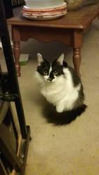 Skitty the cat by KOakaKO
