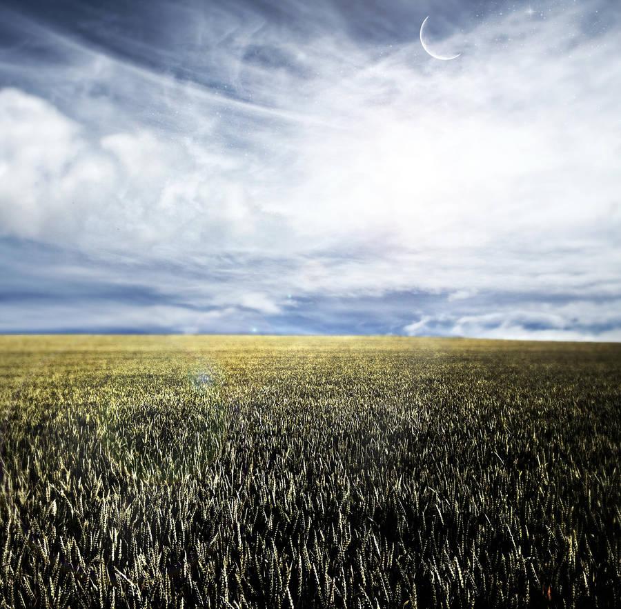dream field by mario-draco