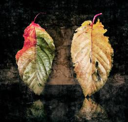 autumn leaf by mario-draco