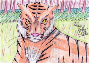 Tigre by Ging1991