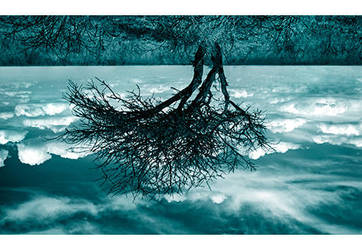 Root by lorrainemd