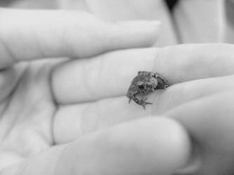 The tiny things in Nature by Emily-Pictures