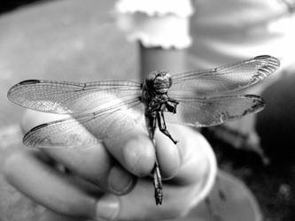Dragonfly -black and white- by Emily-Pictures