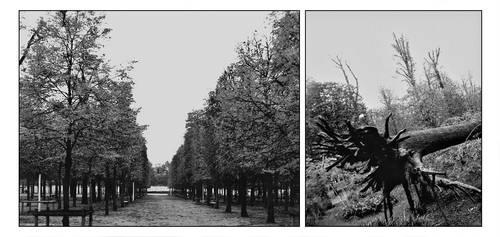 Le jardin des Tuileris by Emily-Pictures