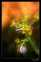 snail by pinkblue