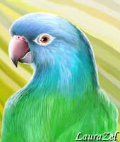 A blu-crowned conure by LauraZel