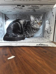 Cat in a Box by FreedomFlying