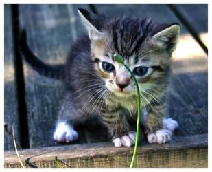 kitten3 by voytela