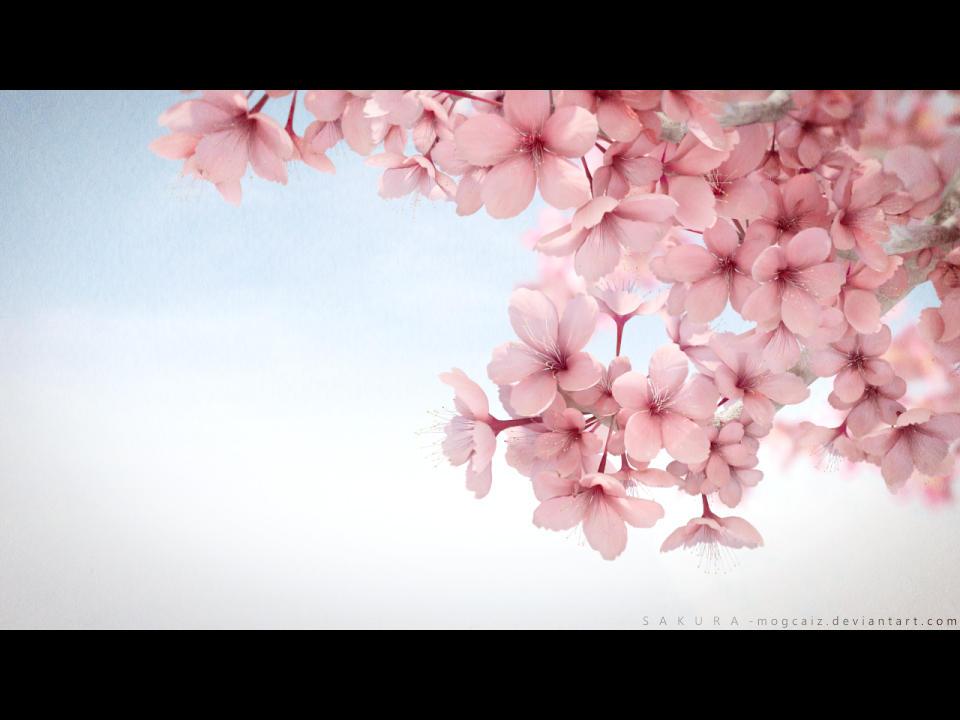 Kyoto Flowers by mogcaiz