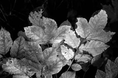 Hiking in Hudson VI by soupforare