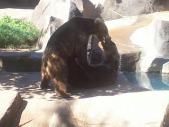 A Grizzly Fight by SnowyPrincessOfTime